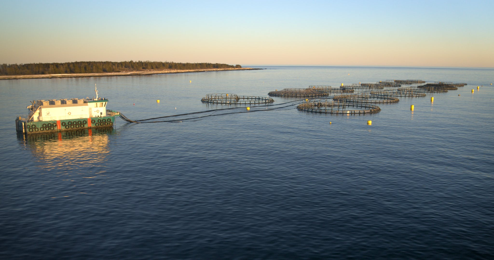 In the aquaculture industry, the fish monitoring technology developed through the Ocean Aware project will aim to provide better information for fish farmers on the health of the farm environment, and their fish crop.