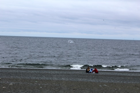 A family of beachgoers looks on as a humpback whale breaches.