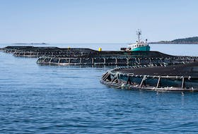 Industry executives suggest it will be a slow start to increasing sales values in 2021 as the salmon farming industry recovers from the COVID-induced collapse of the food service market.