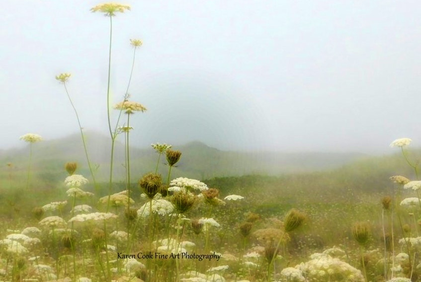 Karen Cook can find beauty in ever type of weather.  She came across this foggy scene in Nova Scotia's Annapolis Valley.