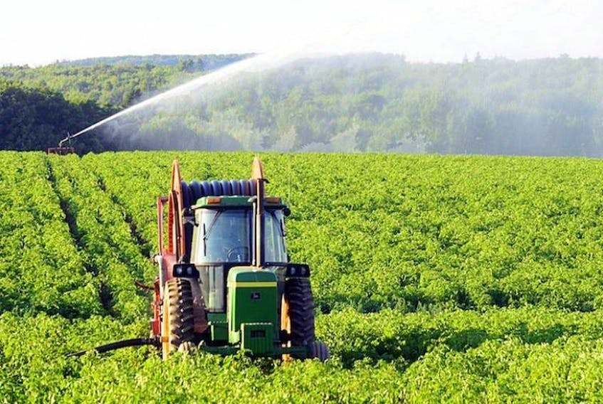 A farmer irrigates his field in western Queens County in this Guardian file photo. (Guardian File Photo)
