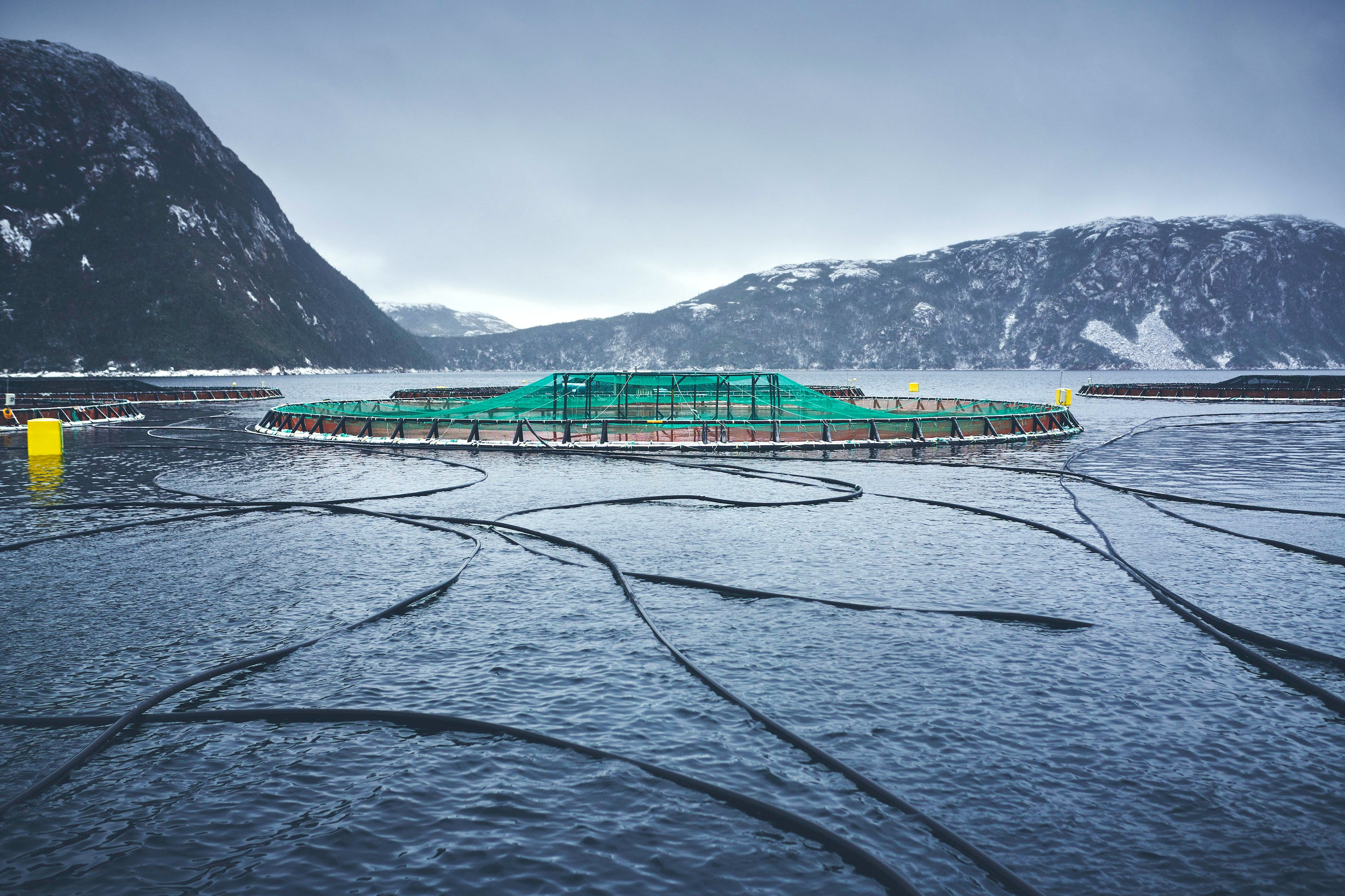 The Department of Fisheries and Oceans (DFO) is leading a discussion towards Canada's first-ever Aquaculture Act. The public has until Jan. 15 to offer comment.