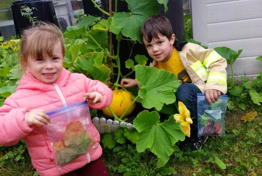 Lexi Wight (left) and Jonathan Bursey (right) explore the school grounds collecting leaves and examining the pumpkins growing near the greenhouse as part of national Tree Day on Thursday.