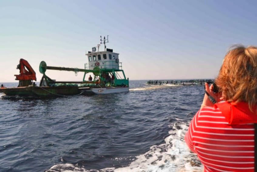 The Nova Scotia Department of Fisheries and Aquaculture says new rules released this week are an attempt to improve the operations and placement of commercial aquafarming sites.