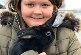 Ten-year-old Lily Oates of St. John's snuggles her pet bunny, Shadow, Tuesday afternoon, for the first time since he went missing Jan. 28. Tara Bradbury/The Telegram