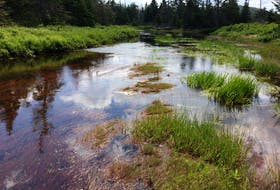 La Manche River, Newfoundland and Labrador. RUSSELL WANGERSKY/SALTWIRE NETWORK