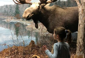 Why not learn more about Nova Scotia and visit the moose on Feb. 17? The Museum of Natural History in Halifax will be open and offering free admission to mark Heritage Day.  - Contributed