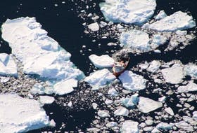 A sealing vessel moves along the edge of an icefield in the Gulf of St. Lawrence.