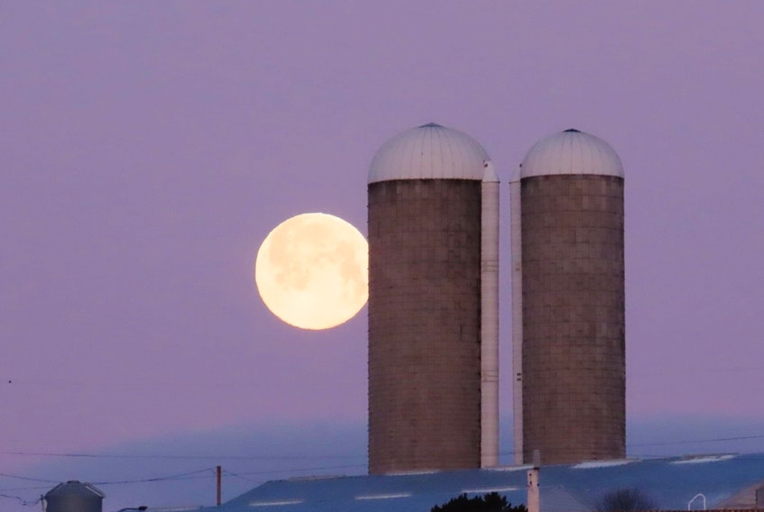 Judy LeBlanc-Brennan's timing could not have been more perfect. She snapped this showstopper as the Full Snow Moon was lowering in the western sky last Sunday morning.  Objects in the foreground usually appear larger than those in the background, but the two silos on the Verschurens' Farm in North Sydney seemed dwarfed by this magnificent optical illusion.