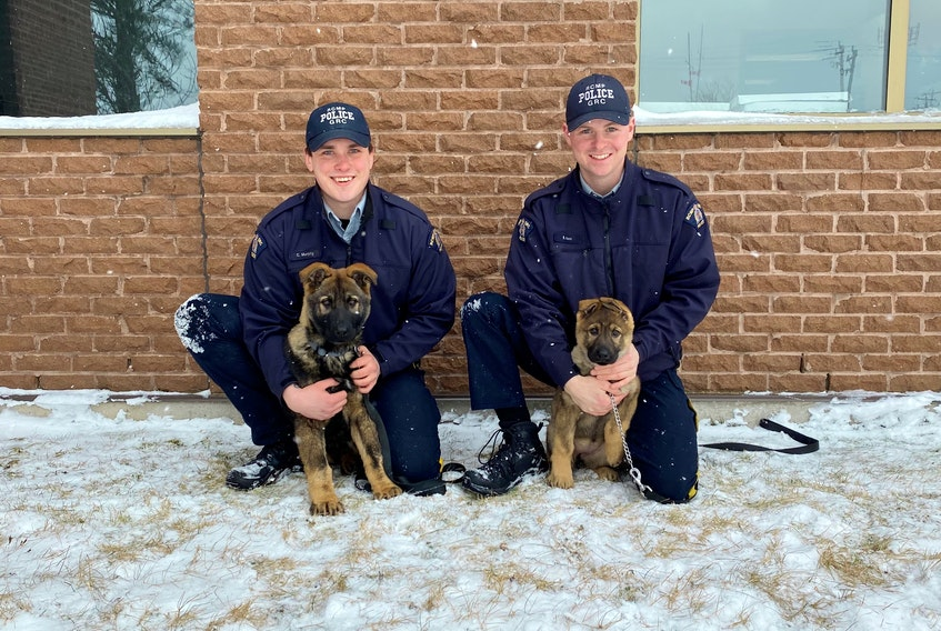 Const. Colin Murphy, left, with five-month-old Neon, and Const. Braedon Rose, with 12-week-old Nattie, are tasked with imprinting these potential police service dogs. Someday they can, perhaps, become police service dogs. BAY ST. GEORGE RCMP PHOTO