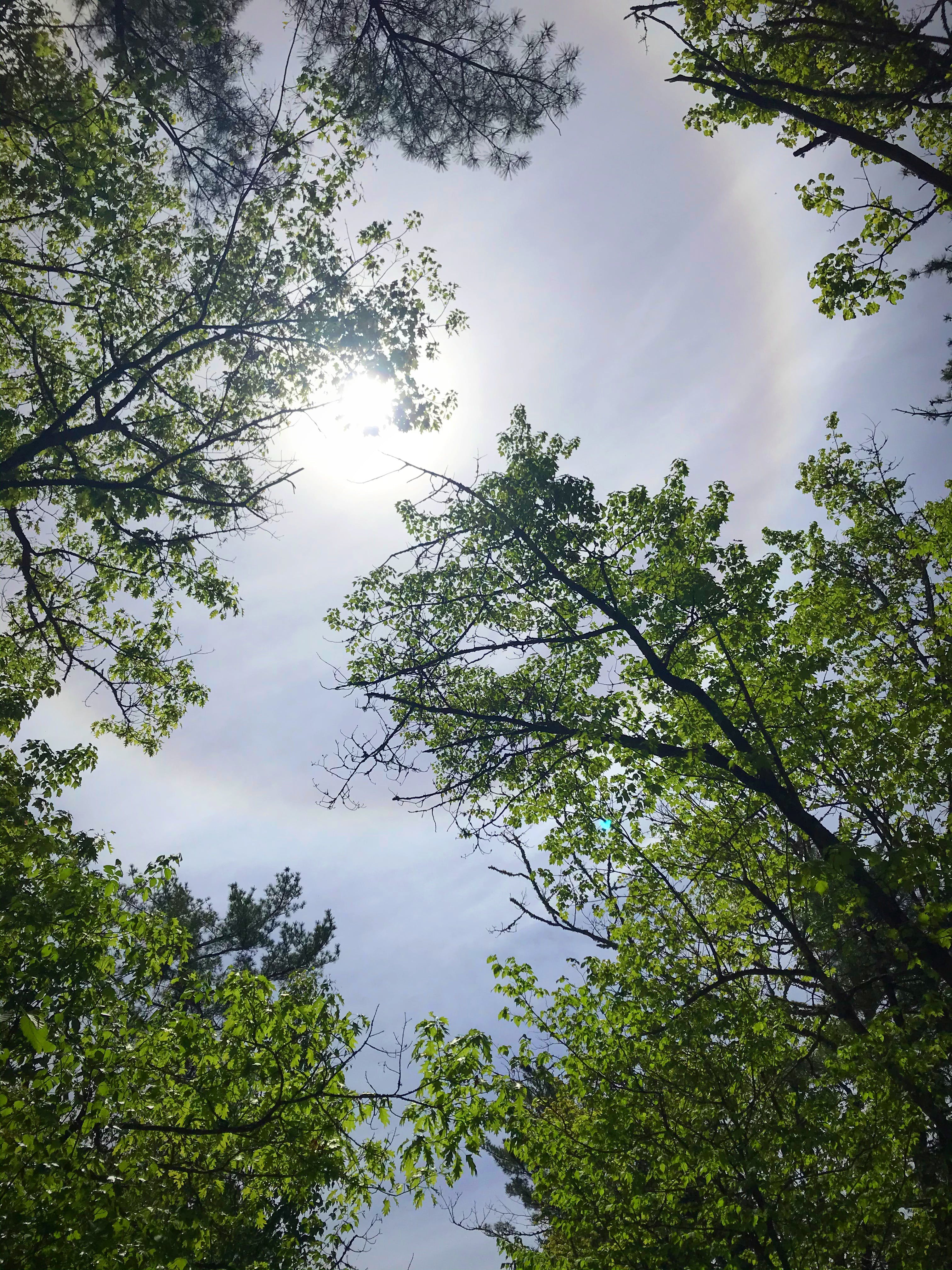 """I don't suppose Linda Mosher had her whites on the lawn when her 16-year-old granddaughter, Robyn Dunbar, snapped this lovely photo. Robyn is from Bayside and was visiting the Gaspereau River when she noticed sunlight filtering through the trees. When she looked up, she was this stunning solar halo – or ring around the sun. Grandma Says: """"ring around the sun or moon, rain upon you soon""""."""