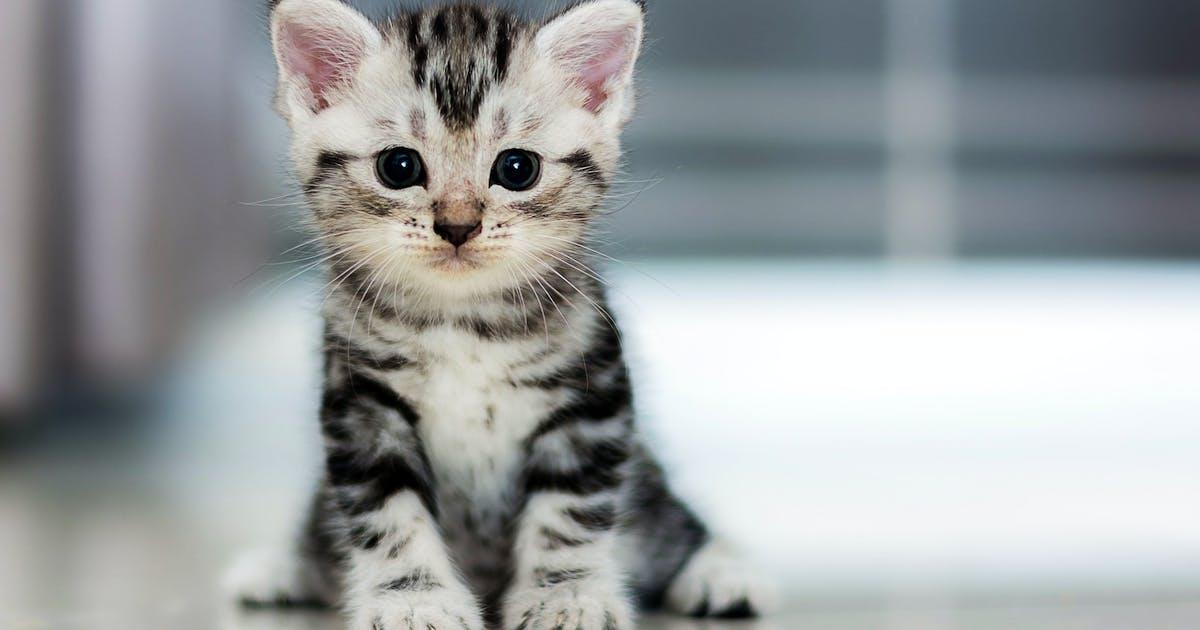 Kittens for sale near me