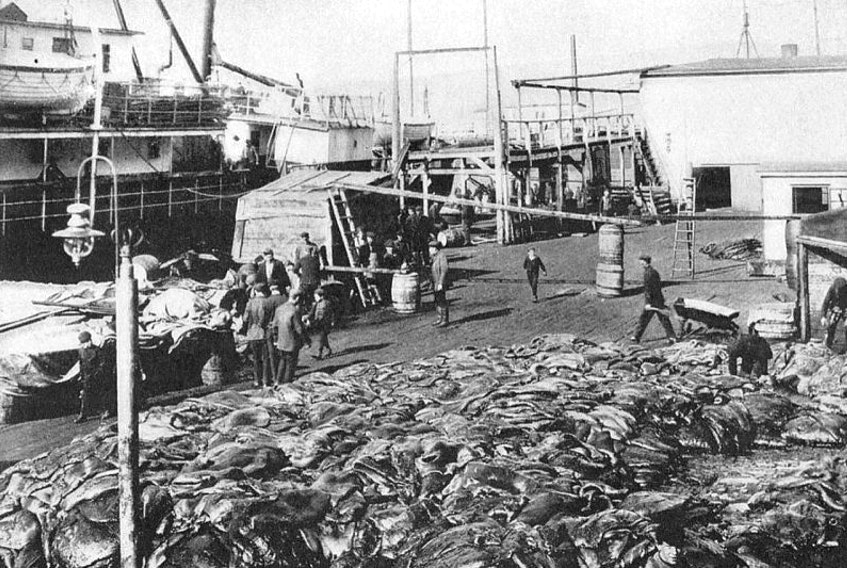 "Pelts, fat and seal carcasses at Southside St. John's premises. This photo by St. John's professional photographer James Vey (1852-1922) is reproduced from George Allan England's 1924 book, ""Vikings of the Ice"". England writes, ""if you want to avoid fat, keep away from this wharf. There are tons of it here."""