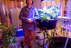 Steve Howard stands under LED lighting inside Summerside's Makerspace aquaponics system, where fish and plants grow together.
