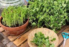 A fun, quick and easy DIY for kids is planting seeds for shoots and microgreens.