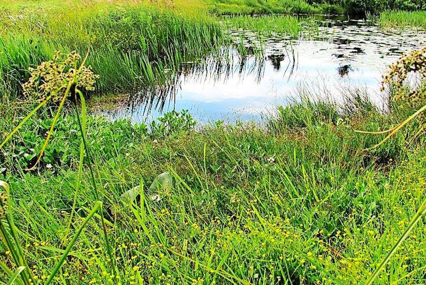 A wetland in Torbay.