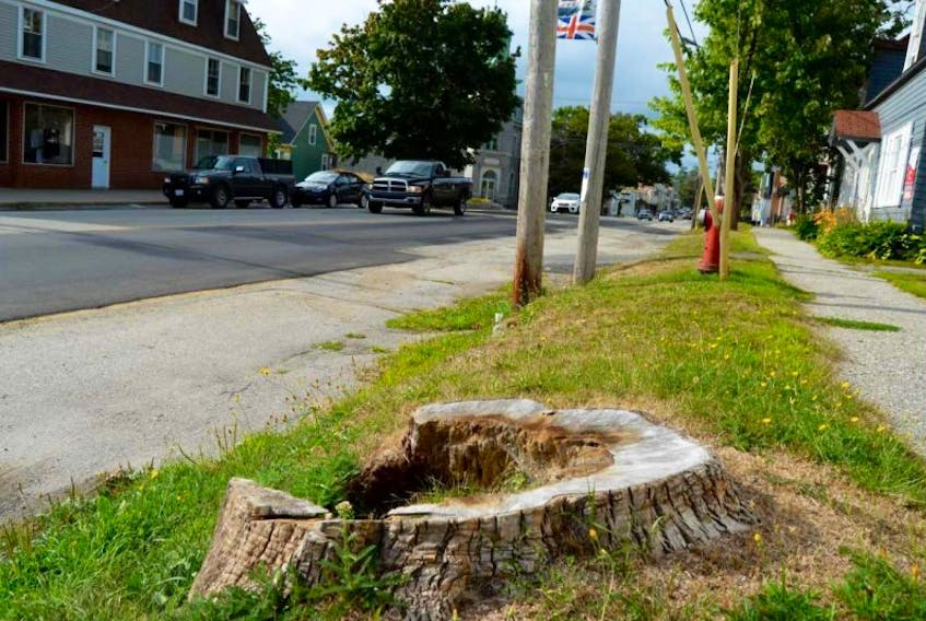 <p>Over the years, Shelburne lost many of its downtown trees to disease and progress. The plantings are hoped to be the beginning of a return to more green scenes of the town from the 1940s and 1950s.</p> <p>Greg Bennett photo</p>