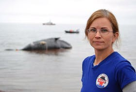 Tonya Wimmer, executive director of the Marine Animal Response Society, said much more needs to be done to reverse the alarming increase in deaths of the North Atlantic right whale.