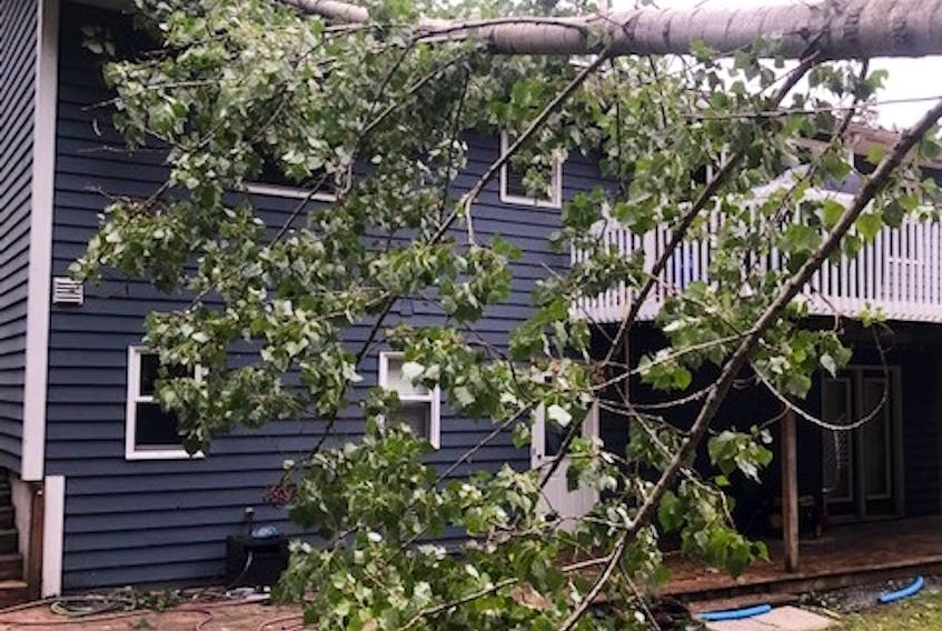 The blustery winds post-tropical storm Dorian brought to Kings County toppled a tree down onto the roof of Lisa Hunt's home in Coldbrook. CONTRIBUTED