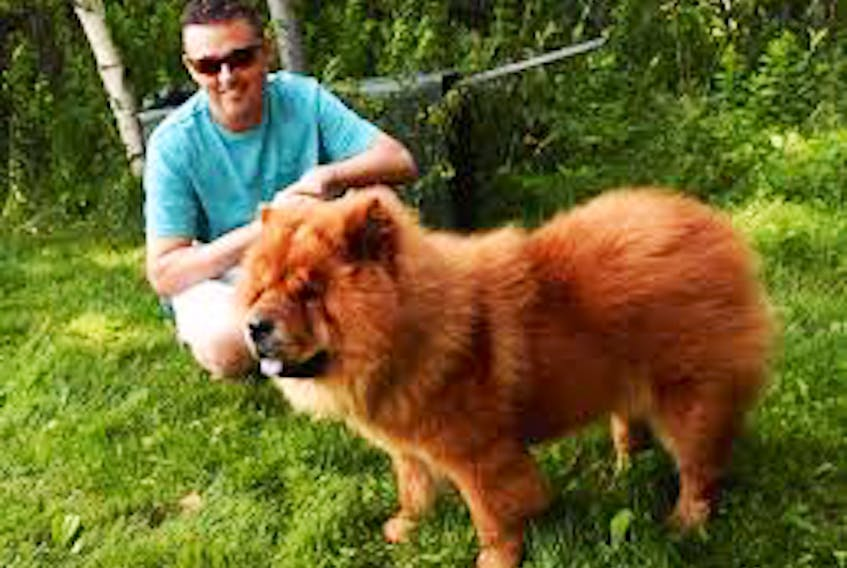 Mike Chapman was called to Cape Breton last year, when Lucky, a prize show dog, ran from his handler. CONTRIBUTED