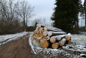Freshly-cut trees from an area of forest that was clearcut. CONTRIBUTED