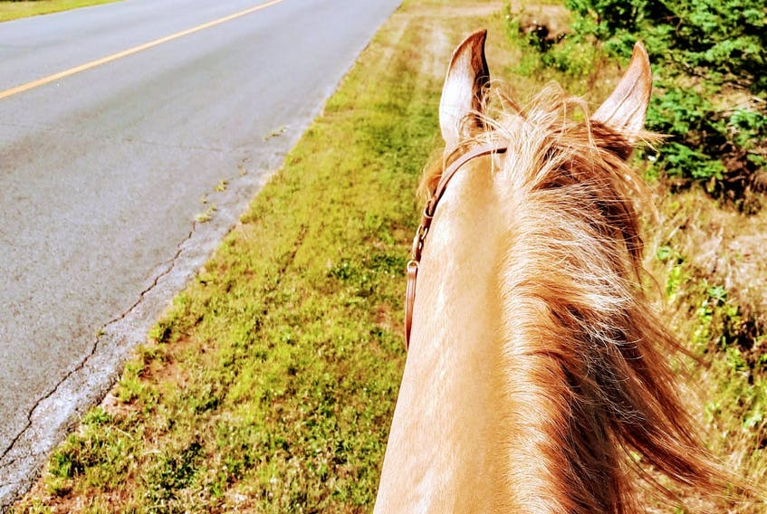 This is Donna Lee's view as she rides her horse, Bohannon, on the side of a P.E.I. road.