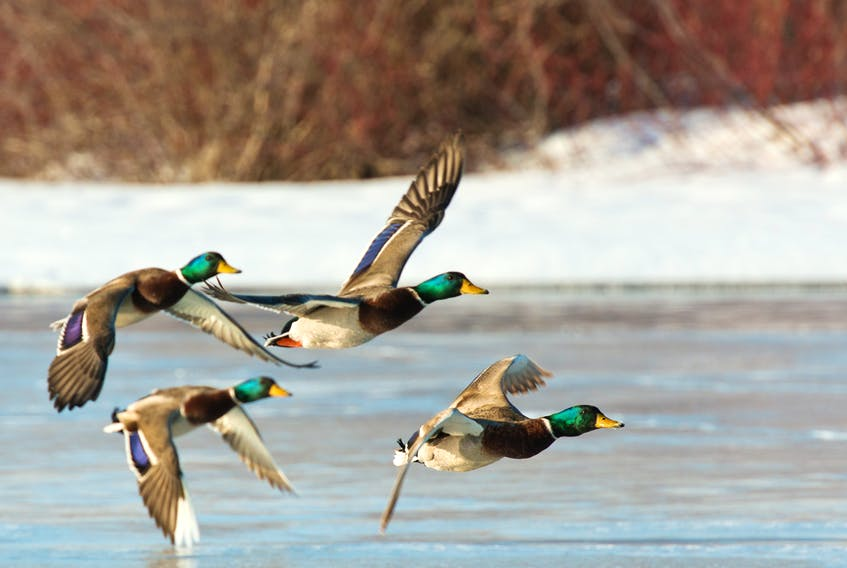 A chapter of Delta Waterfowl is opening in the Humber Valley.