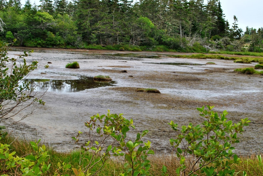 A coastal pond in Atwood's Brook, Shelburne County has all but dried up, due to the lack of rainfall in southwestern Nova Scotia this summer. Kathy Johnson